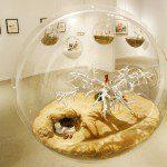 01-Karine-Giboulo-Life-Bubbles