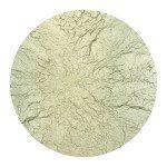 28-Laurent-Lamarche-Mycoplasma