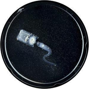 32-Laurent-Lamarche-Mycoplasma